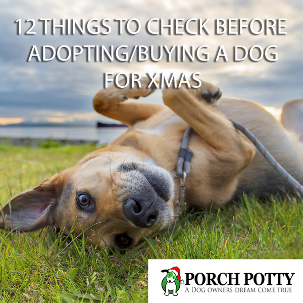 12 THINGS TO CHECK BEFORE ADOPTING/BUYING A DOG FOR XMAS