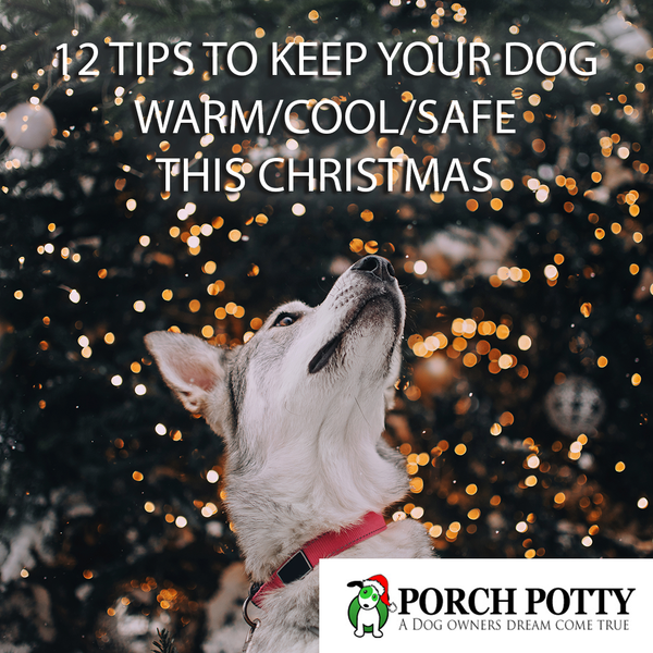 12 TIPS TO KEEP YOUR DOG WARM/COOL/SAFE THIS CHRISTMAS