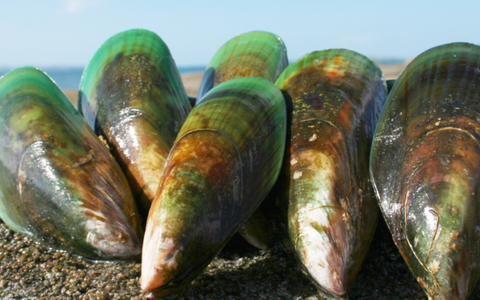 Green-Lipped Mussel for Dogs