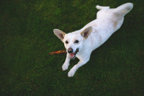 What are CBD treats for dogs?