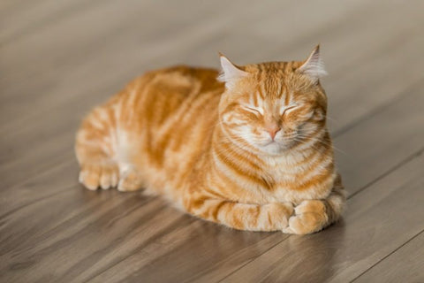 What To Do When Your Cat is Constipated