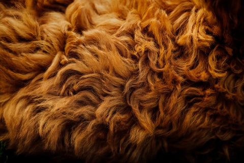 What to Do with Dog Shedding