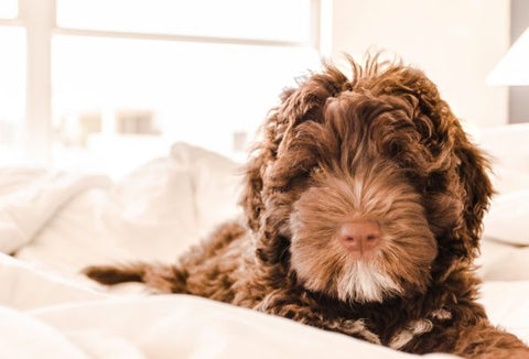 Is CBD for Dogs Safe?