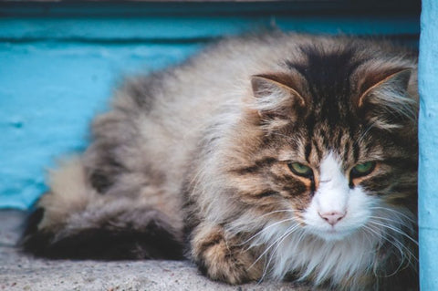 What To Do When Your Cat Has UTI