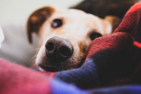 If Your Dog is Vomiting Blood, Here's What to Do