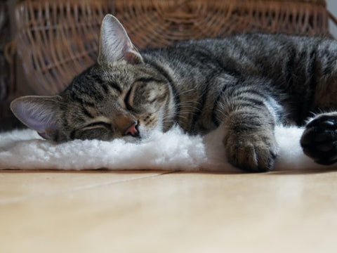 Home Treatment for Cat Hair Loss