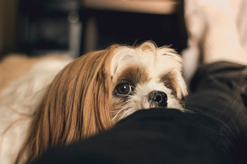 Home Remedy for Dog Tooth Pain Relief