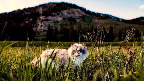 Eye Discharge in Cats: When Should You Worry?