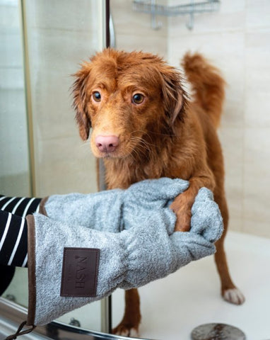 What To Do About Dog Dandruff