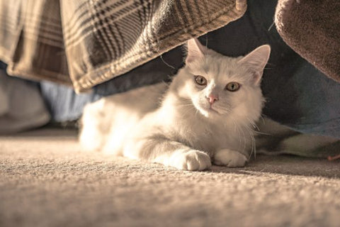 CBD Benefits for Cats: Cancer, Pain, Anxiety and More