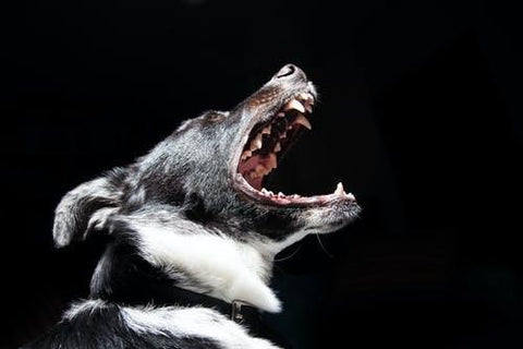 CBD Benefits for a Dog with Aggression