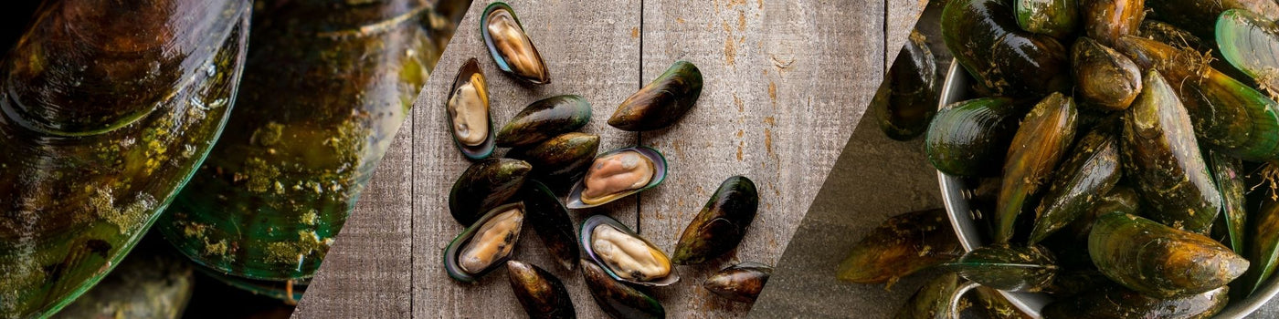 Aroma NZ Ltd - Mussel Extract Supplier and Manufacturer