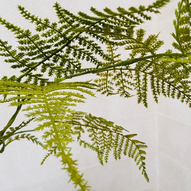 Green Asparagus Fern Spray