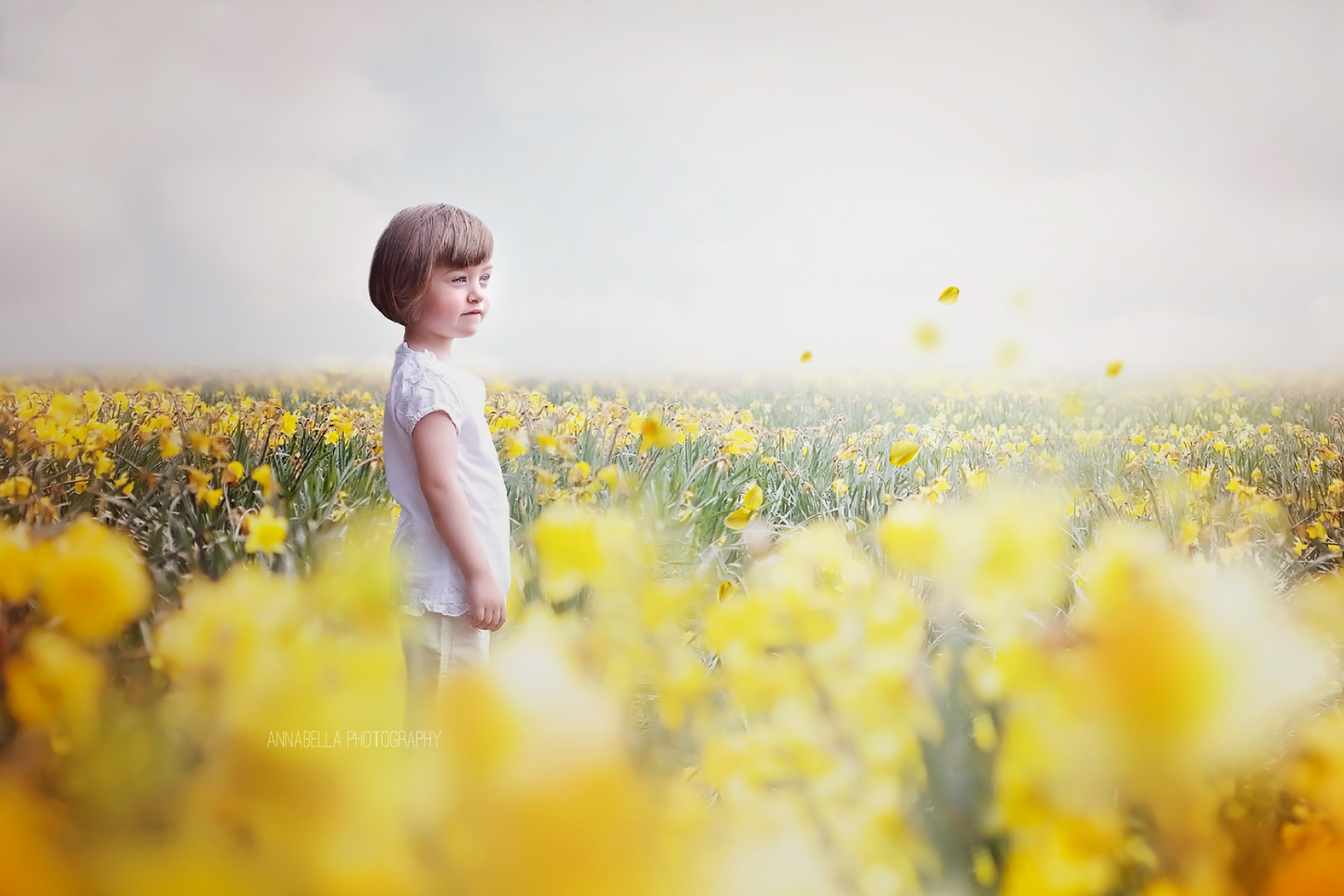 Daffodils Photo Overlays + Free Gift - Photoshop Overlays, Digital Backgrounds and Lightroom Presets