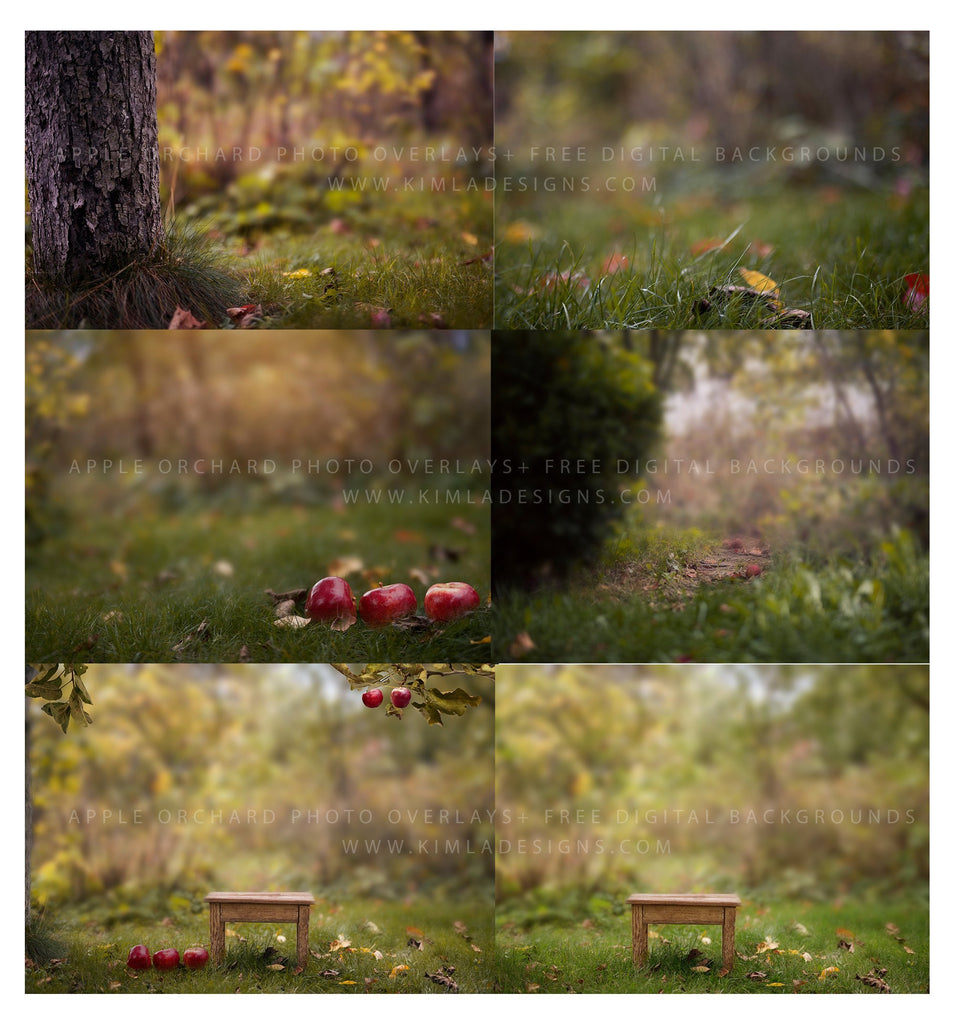 Apple Orchard Photo Overlays and Free Digital Backgrounds - Photoshop Overlays, Digital Backgrounds and Lightroom Presets