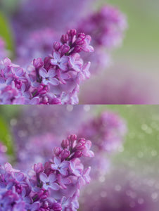 Painted Spring Photo Overlays - Photoshop Overlays, Digital Backgrounds and Lightroom Presets