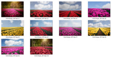 Load image into Gallery viewer, Tulips Photo Overlays + Free Gift - Photoshop Overlays, Digital Backgrounds and Lightroom Presets