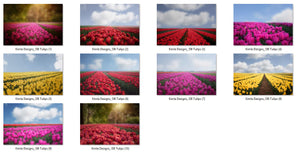 Tulips Photo Overlays + Free Gift - Photoshop Overlays, Digital Backgrounds and Lightroom Presets
