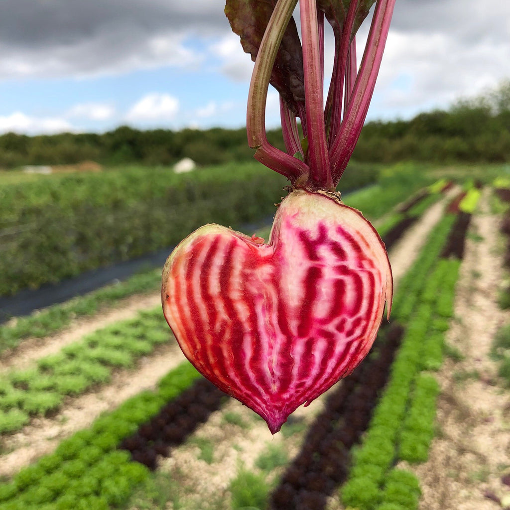 Chioggia Beet Seed Packet
