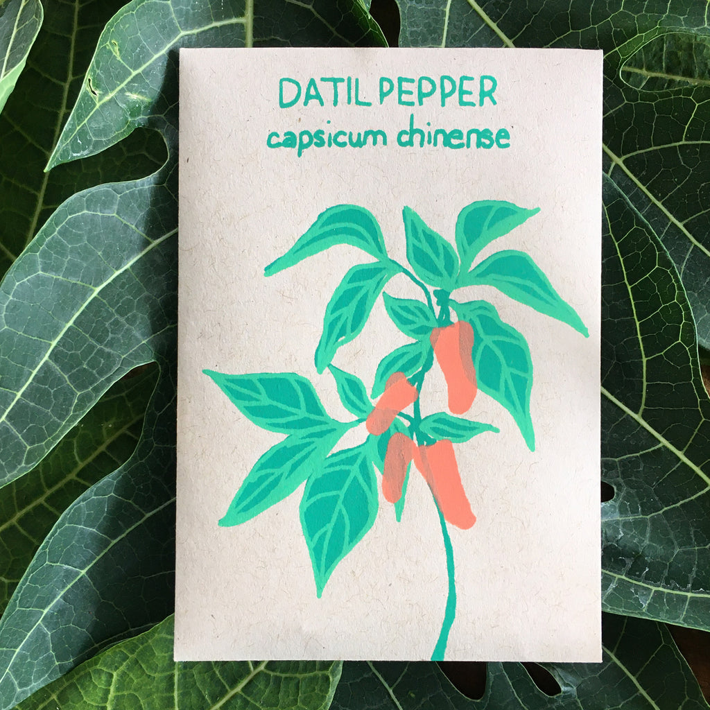 DATIL PEPPER (CAPSICUM CHINENSE) 30 SEEDS