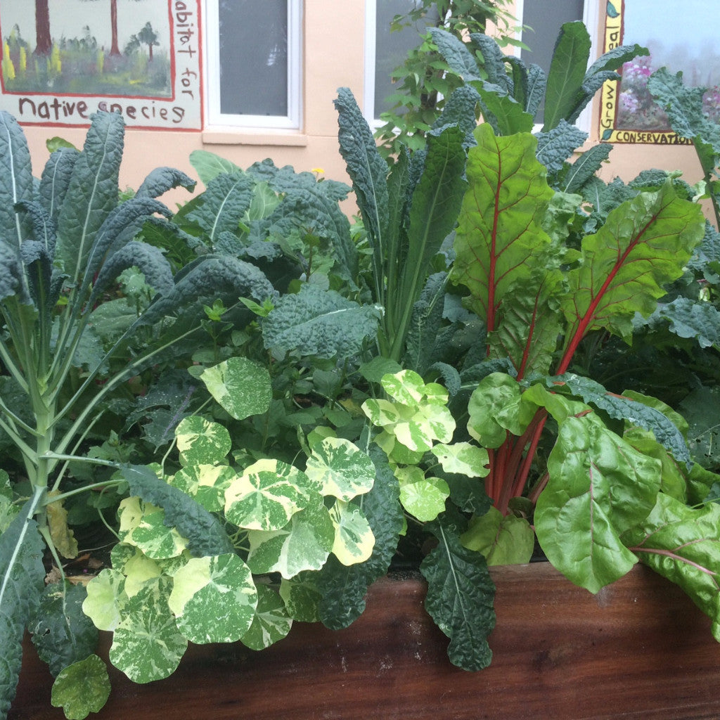... Introduction To Vegetable Gardening In South Florida Workshop, Three  Dates In September To Choose From