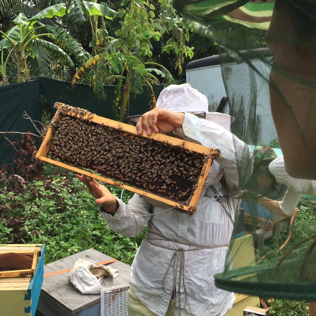Introduction to Beekeping Workshop Sunday January 13th