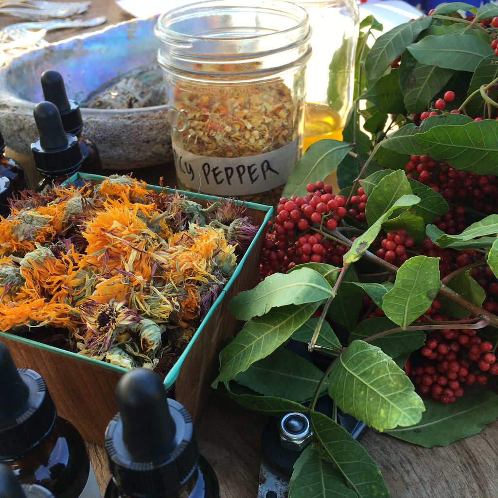 Oil, Vinegar & Salt: a tropical herbalism course with Evelyn Block of Seed & Bone. Saturday January 25th