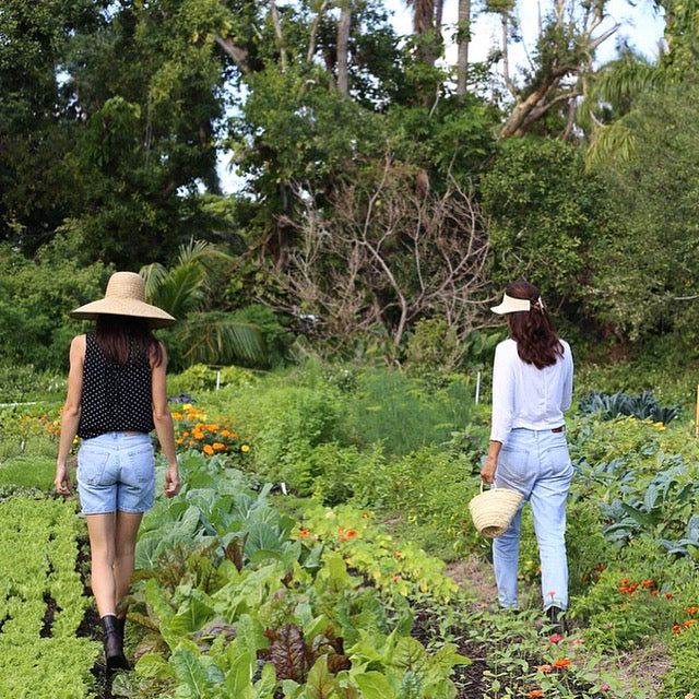 Introduction to herbalism and tropical medicinal plants with Gabi and Katia of Mother Earth Miami