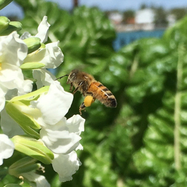 Workshop: Introduction to Beekeeping, Saturday May 27th