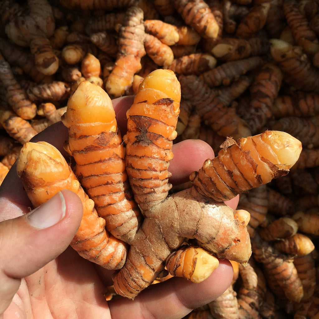 Quarter pound fresh locally grown turmeric grown by Empower Farms, pickup at our cooler in Biscayne Park
