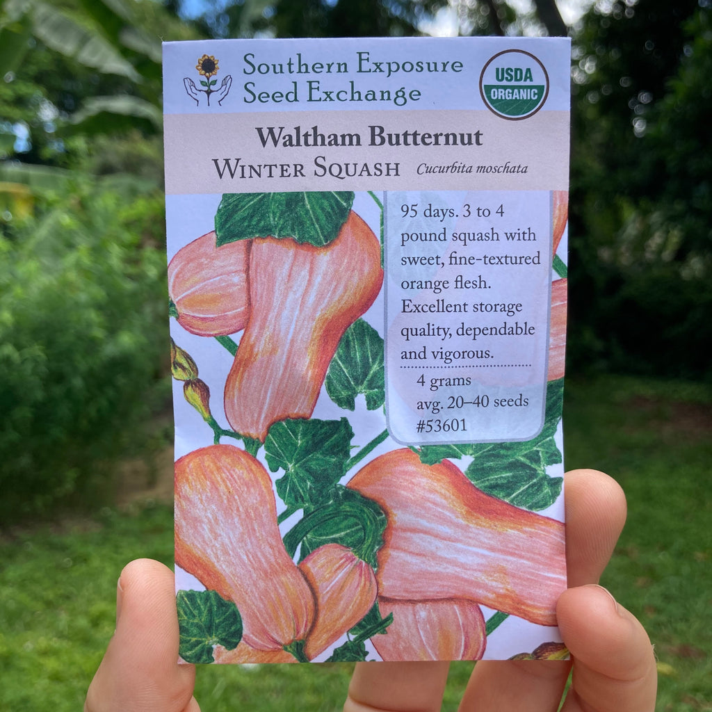 Waltham Butternut Squash Seed Packet