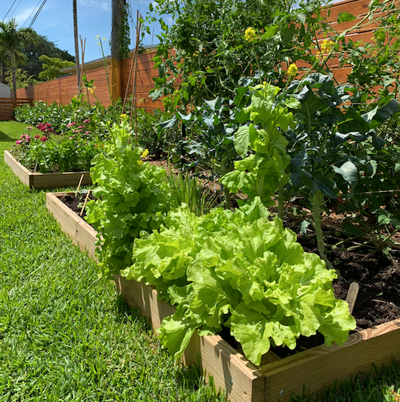 Virtual Workshop: Introduction to Veggie Gardening in South Florida - Video 1: Fall