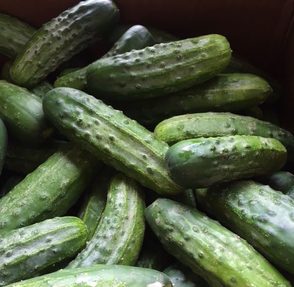Pickling and Fermentation Workshop, Sunday April 10th at the Farm