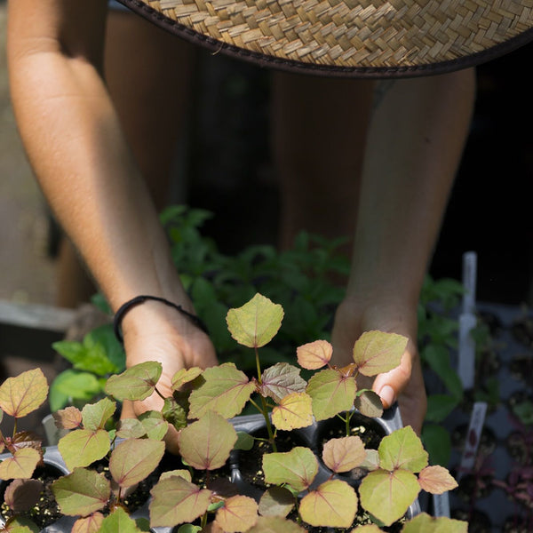 Summer Gardening and Plant Propagation Workshop, Saturday and Sunday April 22nd and 23rd