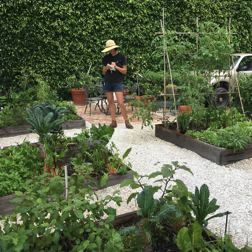 Introduction to vegetable gardening in South Florida Workshop