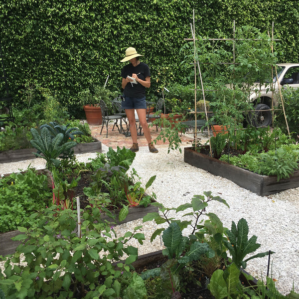 Introduction to vegetable gardening in South Florida Workshop, Sunday October 9th