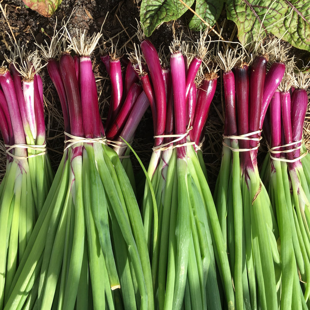 Purple Scallions