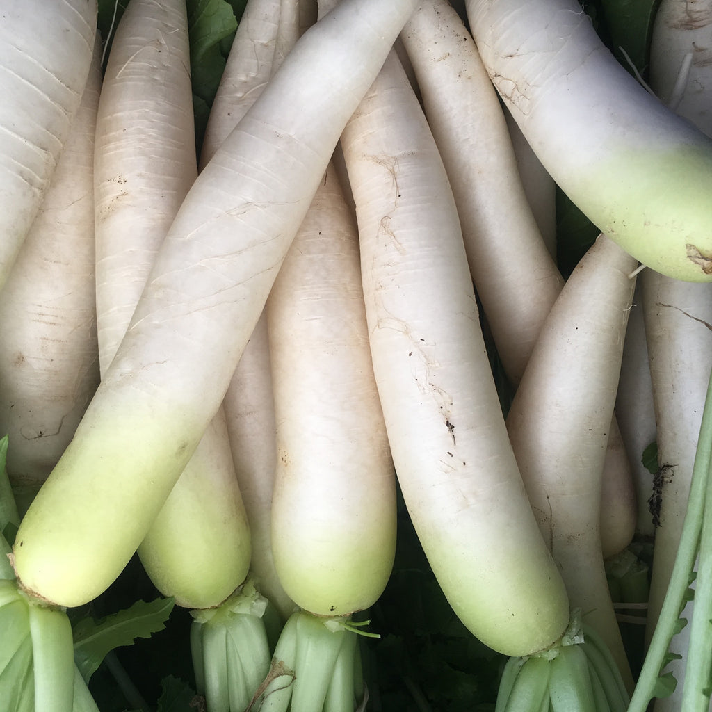 Fujikaze White Daikon Seed Packet