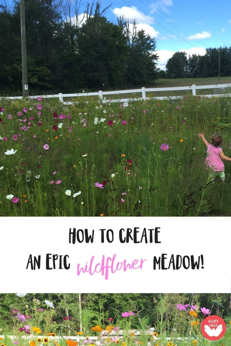 How to plant an EPIC wildflower meadow the kids will love!