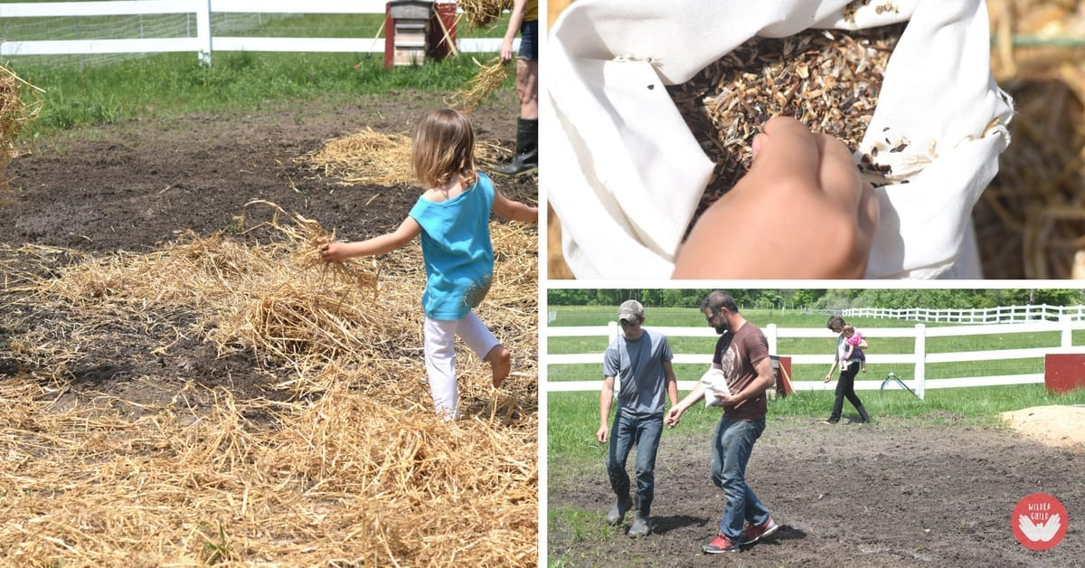 How to create, plant and maintain a wildflower meadow for the kids
