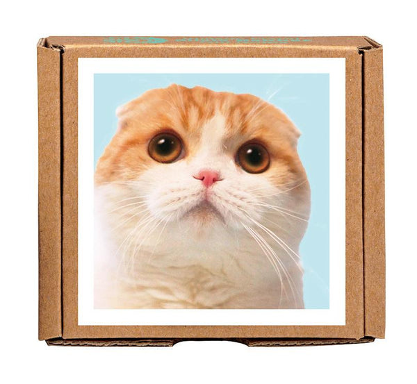 Waffles The Cat Notecards