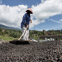Natural Processing of Coffee Beans