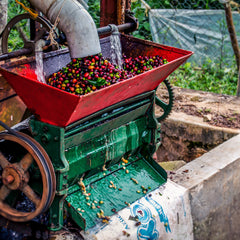 Washing Process of Coffee Beans