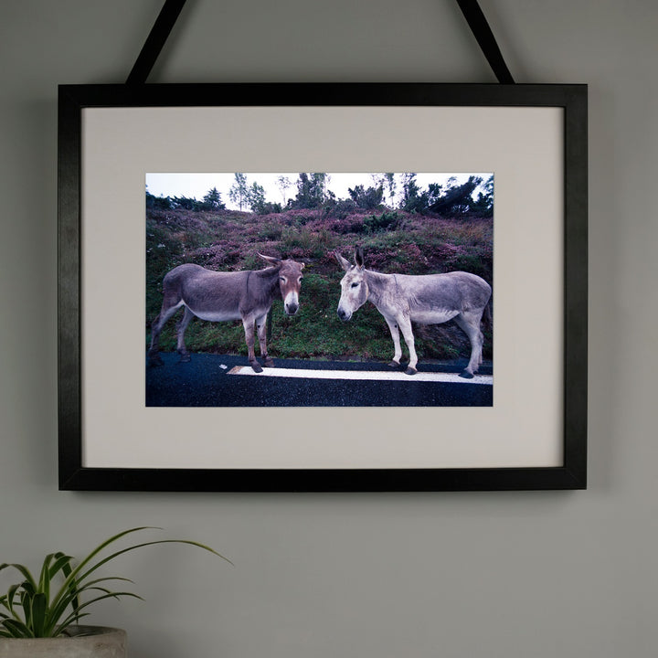 Limited Edition Donkey Gossip A3 Print at Albert & Moo