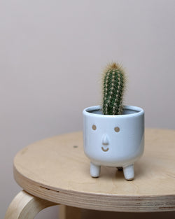 Little Smiler Leggy Plant Pot at Albert & Moo