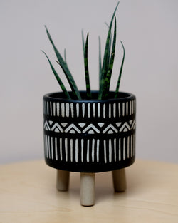 Nala Leggy Plant Pot at Albert & Moo