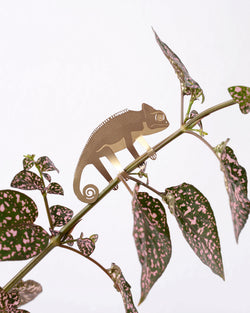 Plant Animal Chameleon by Another Studio at Albert & Moo