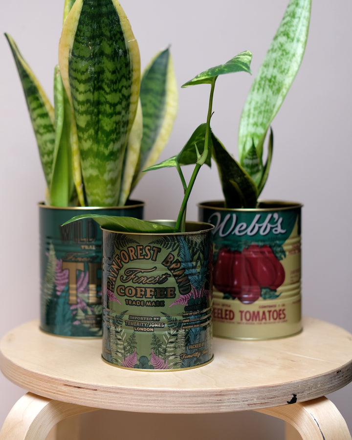 Small Vintage Style Coffee Tin at Albert & Moo