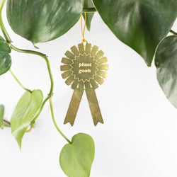 Plant Award by Another Studio at Albert & Moo
