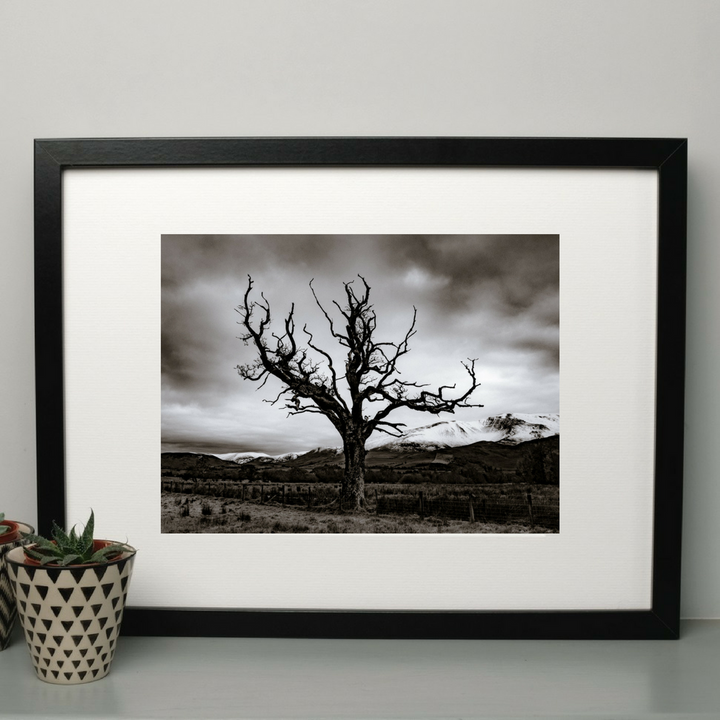 Limited Edition Dead Tree A3 Print at Albert & Moo